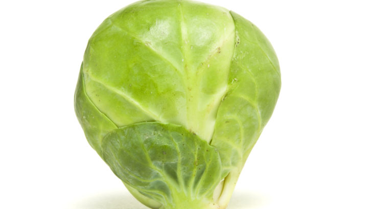 Brussel-Sprout